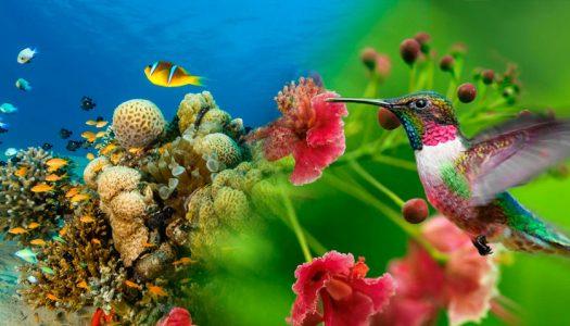 Invitación a participar del Taller y Seminario sobre Ciencia Ciudadana para la Biodiversidad