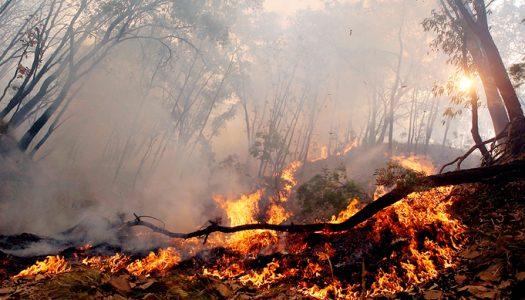 Declaración de la SOCECOL sobre incendios forestales