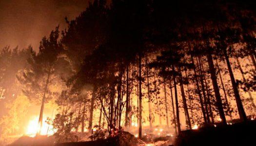 Reflexiones después de los grandes incendios del verano 2017
