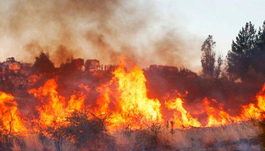 Destacada participación de nuestros socios en la evaluación de los incendios y el desarrollo de un plan de restauración