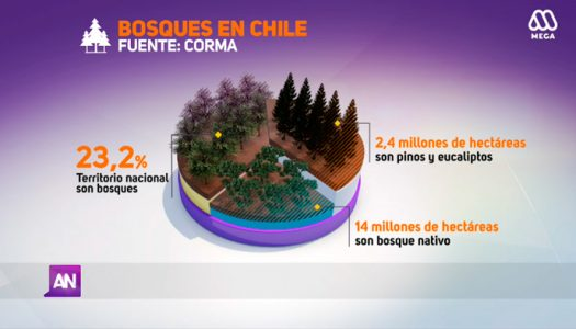 [MEGA REPORTAJE] Bosques en peligro. Participan Christian Salas y Andrés Fuentes miembros de nuestra sociedad.