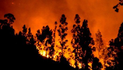 Seis pilares para el desarrollo forestal sostenible