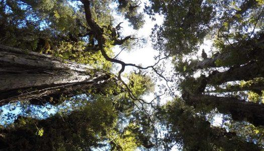 Charla sobre Ecofisiología y Monitoreo de Bosques