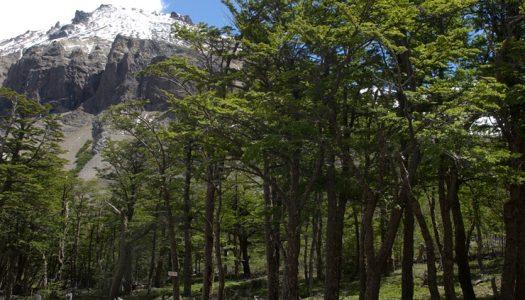 Ecóloga Chilena trabaja junto a viñas de Chile en la búsqueda de conservar nuestra biodiversidad