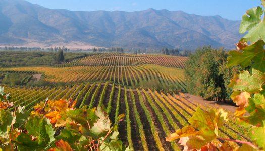 Preservar flora y fauna nativa que rodea a viñas es clave para combatir el cambio climático