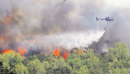 El impacto de los incendios forestales en la flora y fauna nacional podría ser «irrecuperable»
