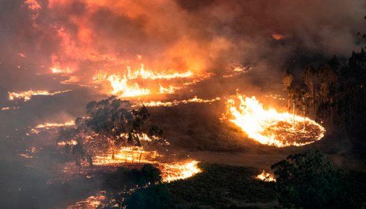 Conaf advierte: Chile tiene condiciones «similares» para sufrir una catástrofe como la australiana