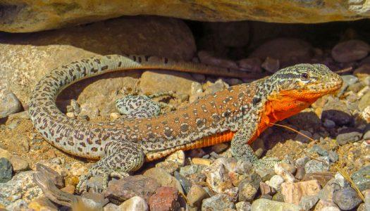 Encuentran gran biodiversidad de especies nativas en quebrada del Valle de Elqui