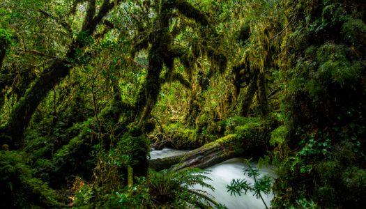 Mantener la biodiversidad es clave para enfrentar pandemias emergentes