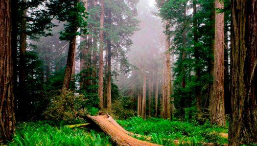 Bosques templados chilenos son igual de ricos en diversidad que selvas tropicales, revela estudio