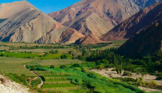 Con foros virtuales buscan proteger patrimonio natural del Valle de Elqui