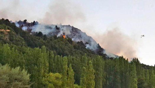 Investigación determinó que incendios forestales en bosques sureños generan daños que pueden durar más de cinco décadas