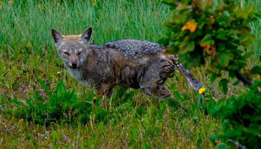 La emergencia de enfermedades en la fauna silvestre, el síntoma de un planeta enfermo