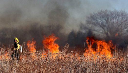 Ignición, combustible, sequía y tiempo apropiado: los ingredientes de los grandes incendios forestales
