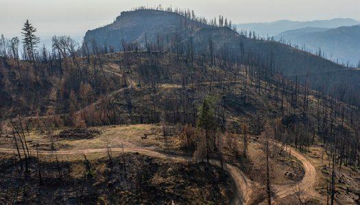 La gestión de los ecosistemas en el marco del cambio climático requiere enfoques adaptativos y traslativos
