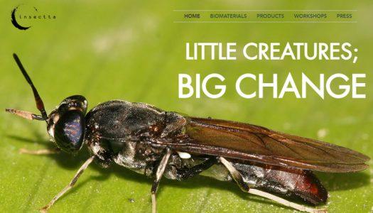 """Startup de Singapur utiliza insectos para convertir el desperdicio de alimentos en un """"tesoro"""""""