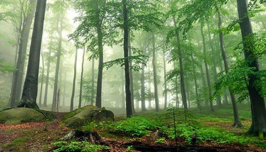 """""""Necesitamos una administración de la biosfera que proteja los sumideros de carbono y fomente la resiliencia"""""""