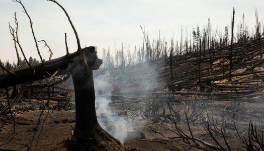 LIMPIEZA DEL TINDERBOX: A medida que el clima se calienta, un gran experimento forestal tiene como objetivo reducir el riesgo de incendios forestales y encontrar un terreno común entre los madereros y los ambientalistas.